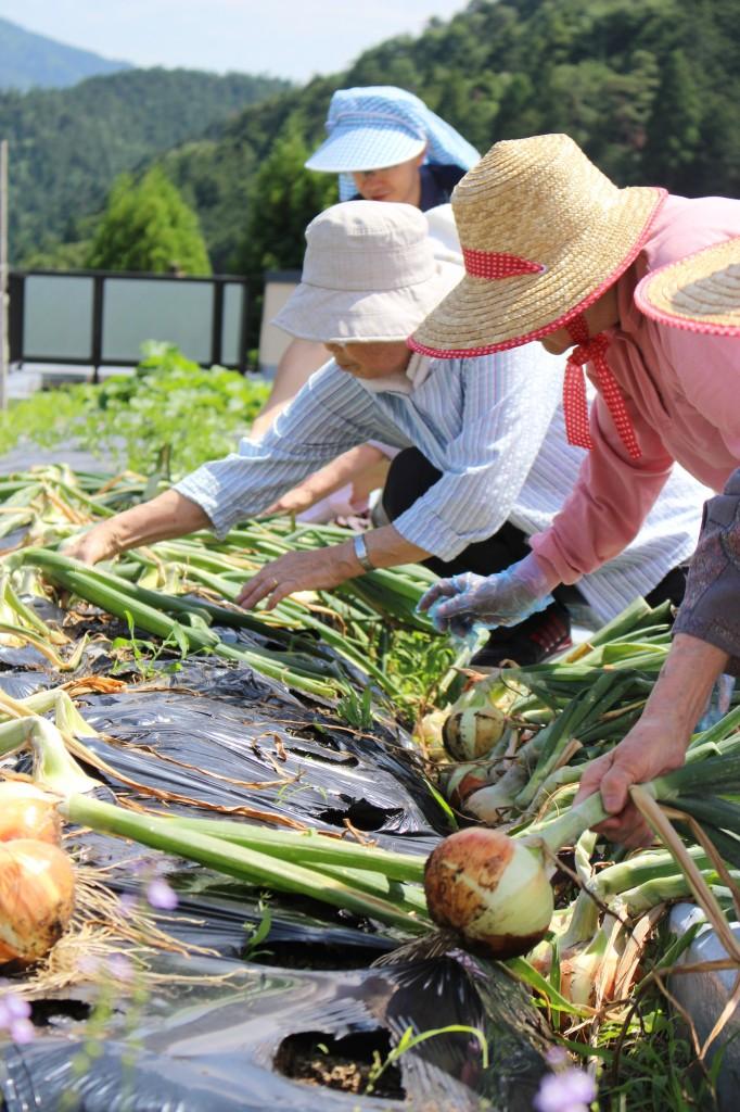 やまびこ菜園 (4)